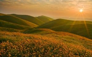 Цветущие холмы