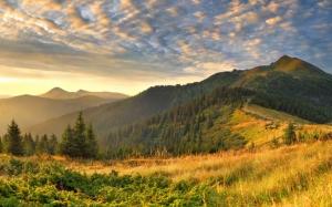 Лес на холмах