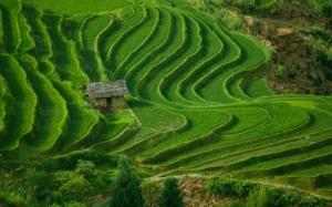 Зеленые поля в Китае