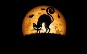 Черный кот в Хэллоуин
