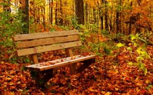 Скамейка в осенней листве