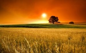 Закат над желтым полем