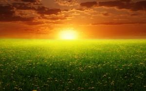 Закат над зеленым полем
