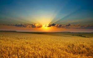 Закат над пшеницей