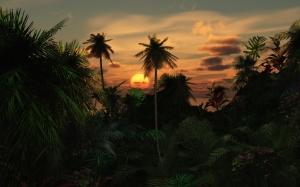 Закат над пальмами