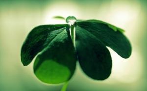 Темно-зеленые листья