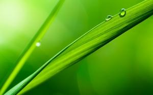 Вода на листе