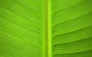 Красивый лист