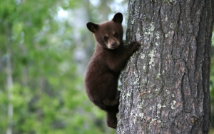 Медвежонок на дереве