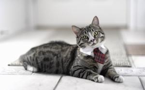 Кот с галстуком