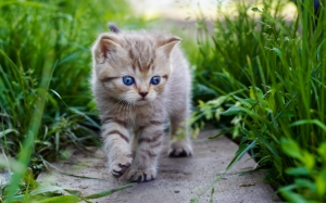Котенок в траве
