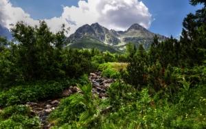 Гора и зелень